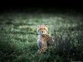 20140108 Serengeti Under Canvas 6619