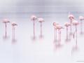 Lesser Flamingos at Lake Ndutu